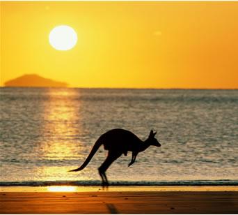 http://mhdariefhasan.files.wordpress.com/2009/03/australia_kangaroo.jpg
